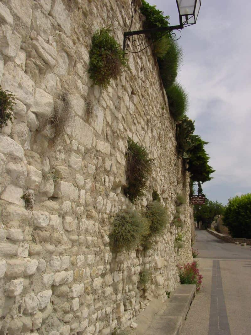 I don't know if these plants were placed into this wall or if they took root over time.