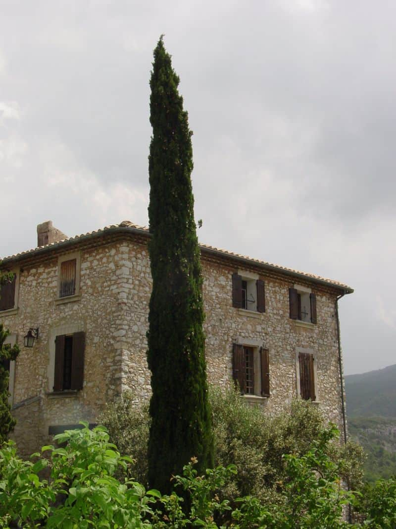 Cypress Trees are used in the landscape throughout Provence.